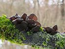 Nižší houby