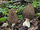 Vřeckovýtrusné houby